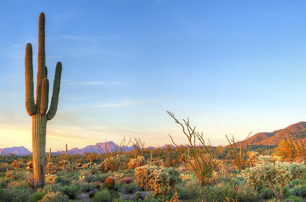 Kaktusöl für Ihre Schönheit